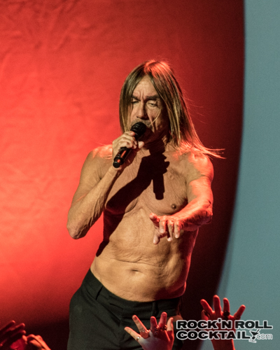 Iggy Pop photographed by Jason Miller-34